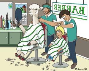 Alpaca Book page - Barber