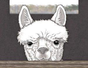 Alpaca book project - Coby