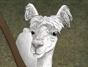 Alpaca book project - Snarf