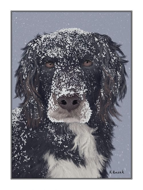Dog with snow